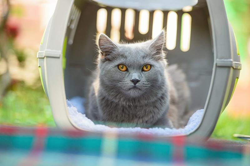 Consejos útiles para reducir el estrés de viaje de tú gato