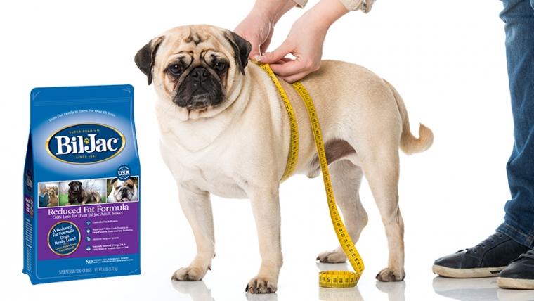 Cómo la comida para perros reducida en grasa puede ayudar a tu gordito