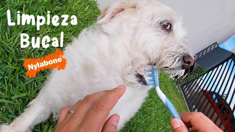 Consejo útil para mantener la limpieza bucal de tu perro