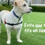 Evita que tu perro tire en sus paseos