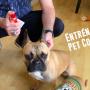 Entrénalo con Pet Corrector
