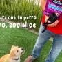 4 pasos para que tu perro agresivo, socialice